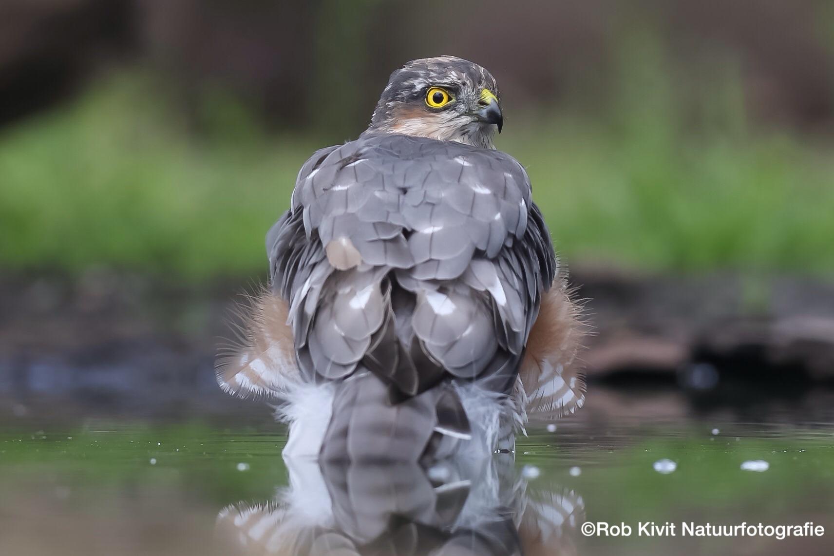 Vogelen in Lemele (HBN7)