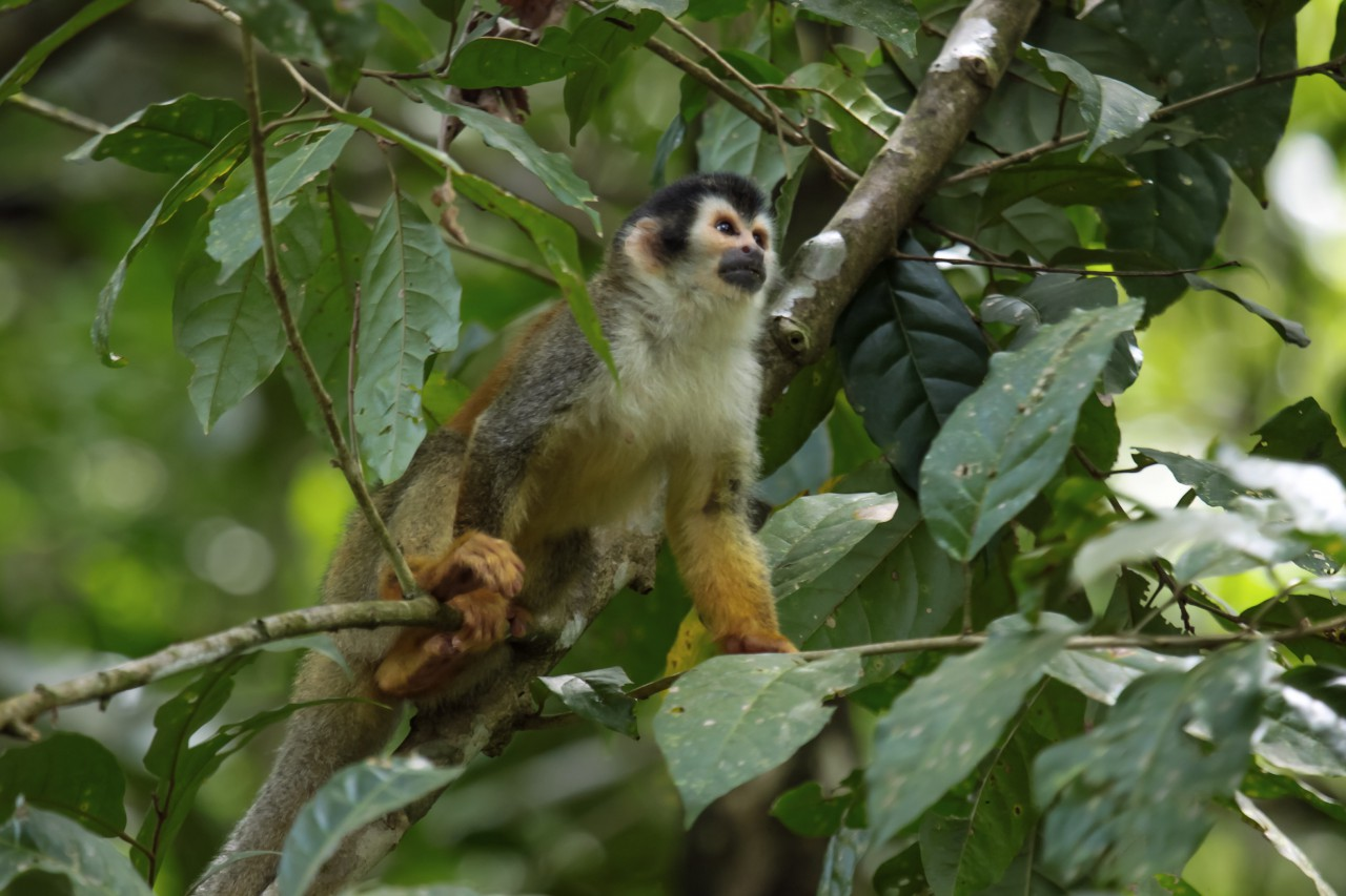 Costa Rica: het pure leven in de overweldigende natuur