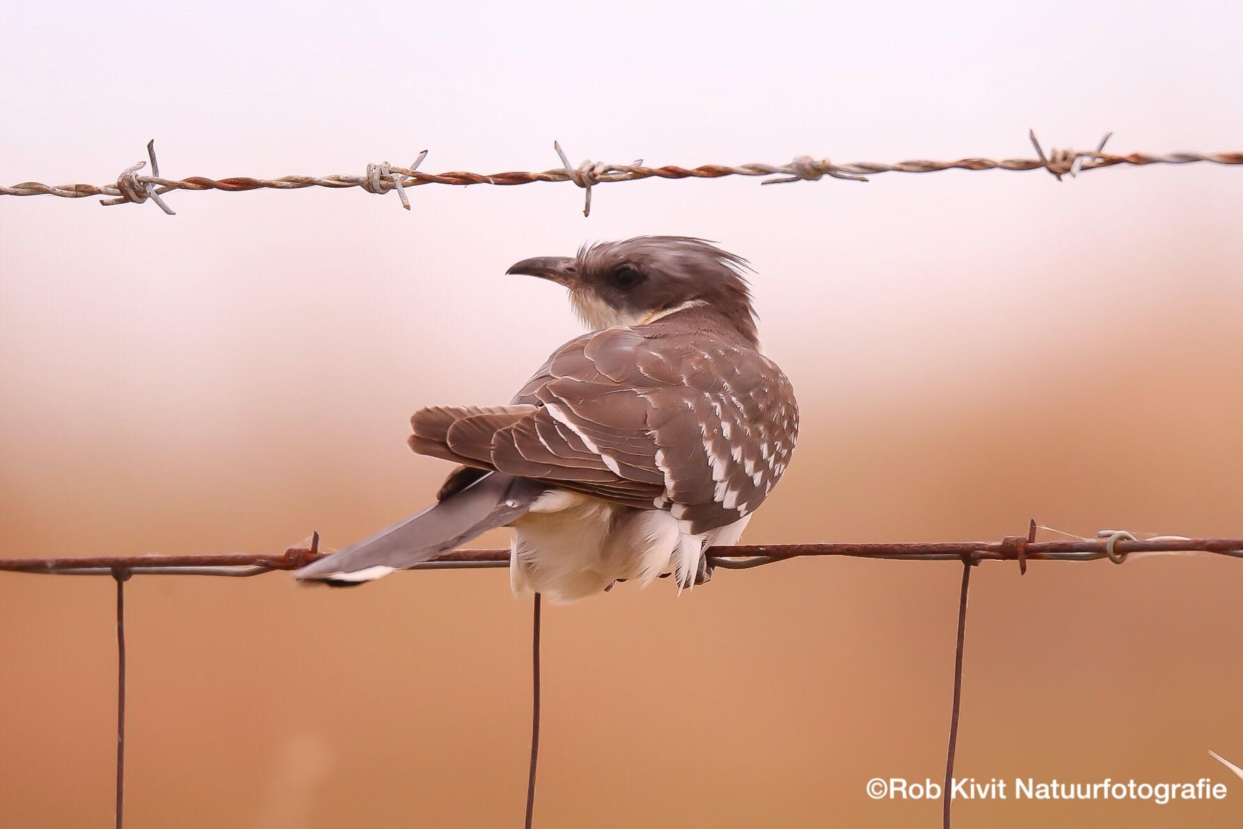 Vogeltrip Extremadura Spanje 2017
