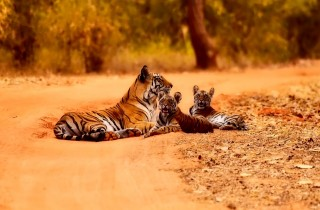 Impressie wildlife in India
