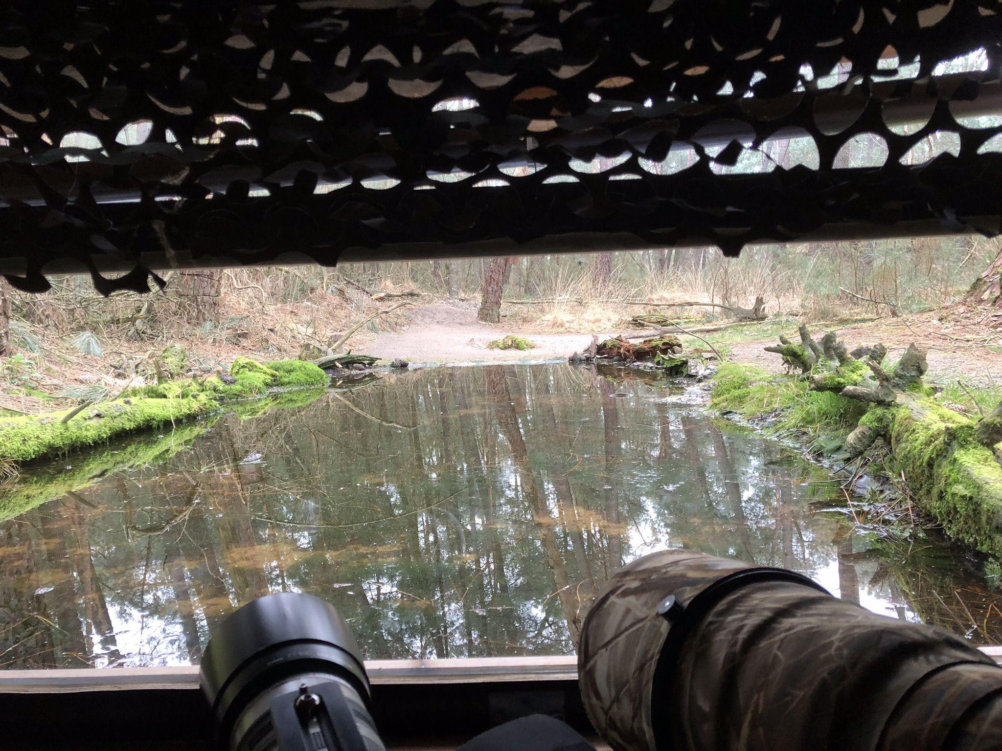 Hut 8 - Bosvogels (Gemengd bos)