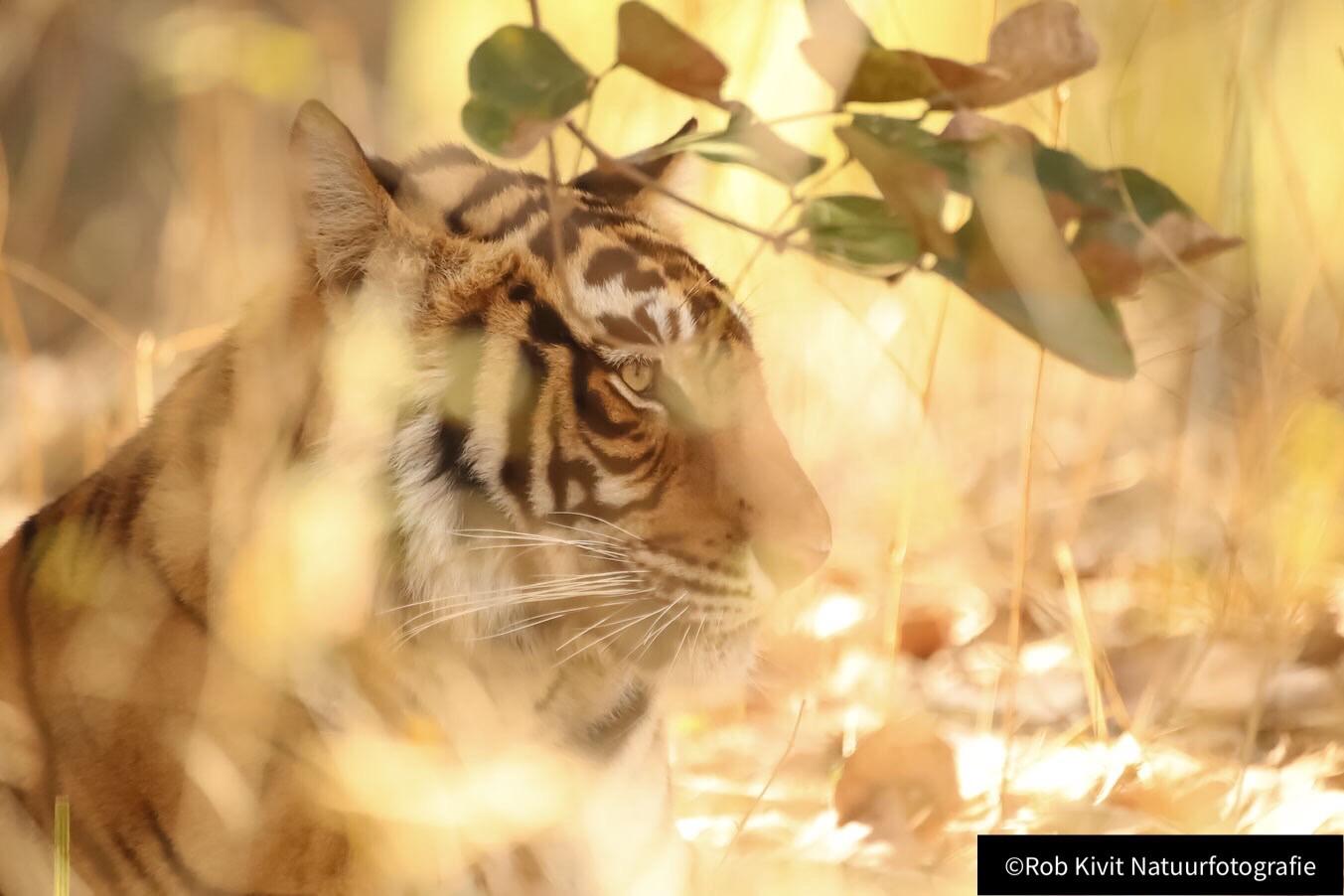 Impressie fotoreis India: Delhi-Agra-Bharatpur-Ranthambore-Jaipur-Sariska