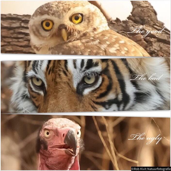 Impressie wildlife in India